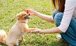 家庭犬訓練
